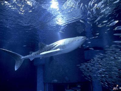 Osaka Bay Area Half Day Tour with Aquarium Kaiyukan and Osaka Bay Cruise