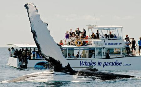 Full-Day Deluxe Whale Watching Trip from Brisbane