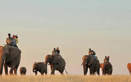 Elephant Ride at Victoria Falls, Zimbabwe