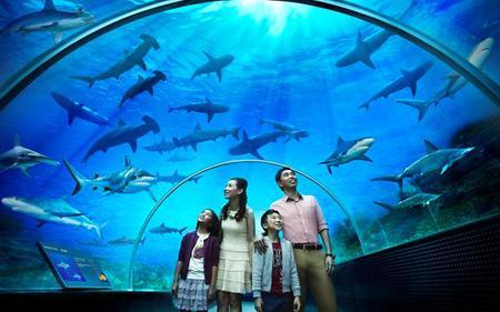 Singapore S.E.A. Aquarium Day Pass with optional Hotel Pick up