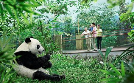 Saver Combo: Singapore Night Safari and River Safari with Transfers