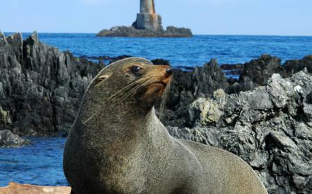 Seal Coast Safari in Wellington