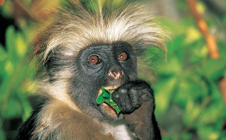 From Zanzibar City: 3-Hour Jozani Forest Tour