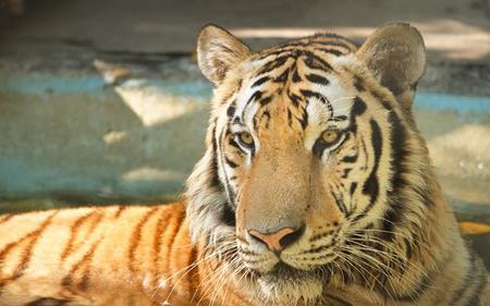 A Day At Safari World Bangkok