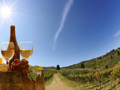 Food and Wine Tasting Tour from Lucca