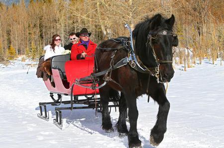 Private Horse-Drawn Sleigh Ride In Banff