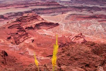 Canyonlands Backcountry 4x4 Half Day Tour