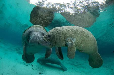 Private Manatee Swim in Crystal River