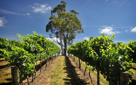 Adelaide Hills & Hahndorf: Intimate Wine and Food Experience