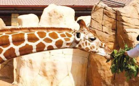Emirates Park Zoo Full-Day Tour from Dubai