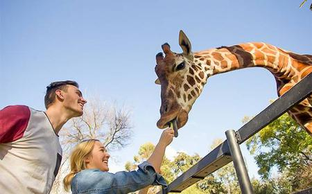 Adelaide Zoo Ticket & Giraffe Feed