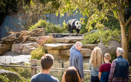Adelaide Zoo: Panda & Friends Tour