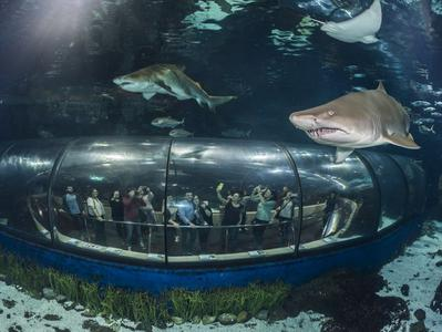 Skip the Line Ticket To the Aquarium of Barcelona