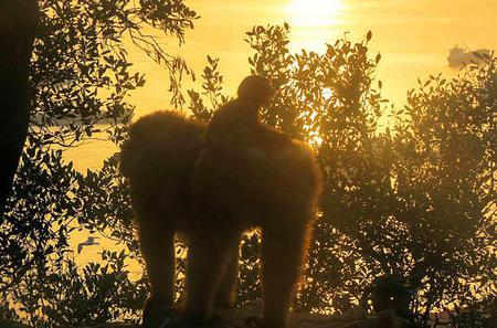 Gibraltar Macaque Experience