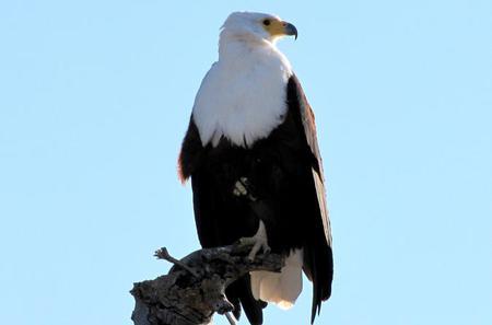 Half-Day Birding Tour of Livingstone