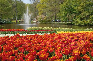 Amsterdam Combo: Van Gogh Museum and Canal Cruise with Optional Skip-the-Line Keukenhof Gardens