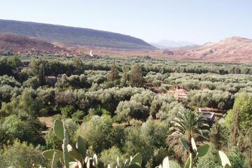 Private Day Trip: Zat Valley and Pottery Village from Marrakech