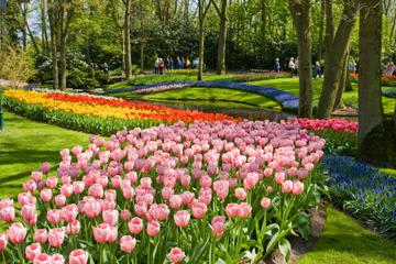 Skip the Line: Keukenhof Gardens Tour and Tulip Farm Visit from Amsterdam