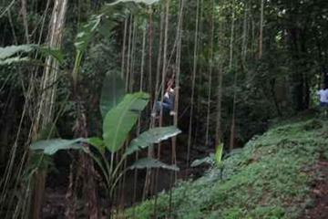 St Kitts Rainforest Nature Tour
