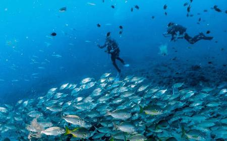 Arinaga: 3-Hour Scuba Diving for Licensed Divers