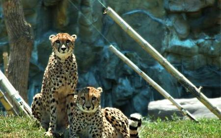 Temaiken Zoo: Full-Day Guided Visit from Buenos Aires