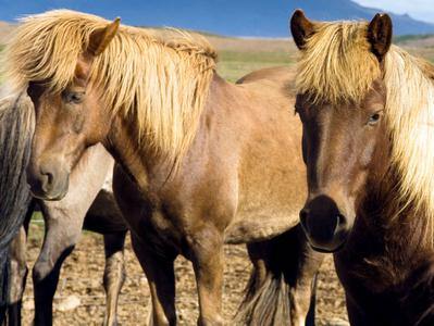 The Viking Horse Riding Tour and Blue Lagoon Direct