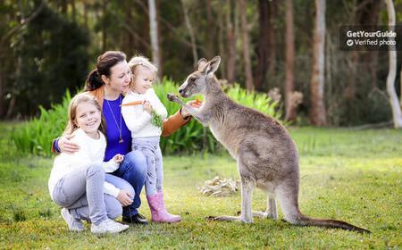 Vivid Sydney Combo: Taronga Zoo and Vivid Experience