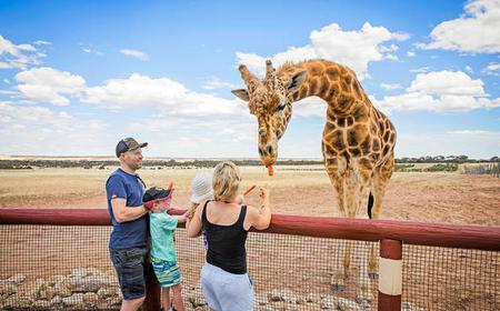 Monarto Zoo: Giraffe Safari