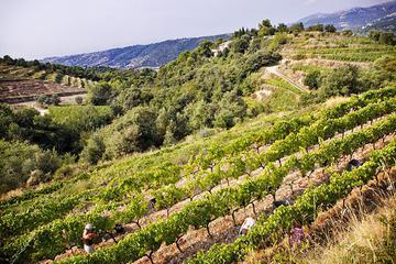 Organic Wine Tour from Nice