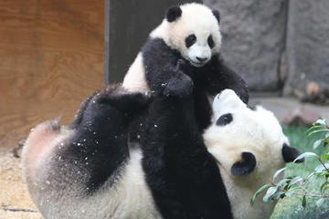 Private 3-Day Family Tour Combo Package: Classic Beijing Plus Panda House And Happy Valley Amusement Park