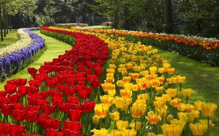 Keukenhof and Flower Fields: 6-Hour Tour from Amsterdam