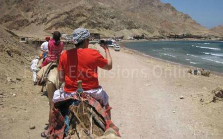 Camel Ride & Bedouin Dinner Show in the Sinai Desert