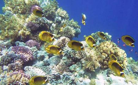 Snorkeling Excursion from Dahab - Private Trip