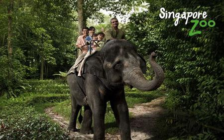 Singapore Zoo - With Shuttle Transfers