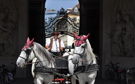 Vienna Hop-On, Hop-Off Tour with Walking Tour, Horse and Carriage Ride & Optional Cruise