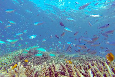 Snorkelling Day Tour To The Secret Underwater World of Amed
