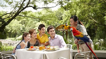 Lunch with Parrots
