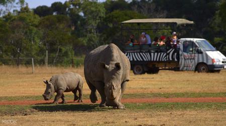 Werribee Open Range Zoo Off Road Safari