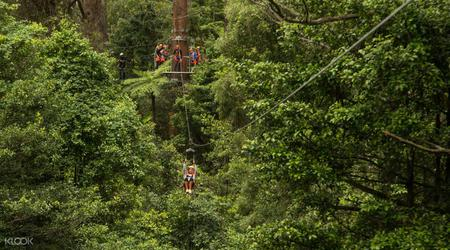 Illawarra Fly Zip Line Tour