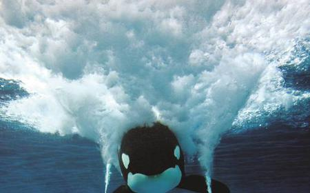 SeaWorld San Diego Round-Trip Transfers from Anaheim