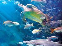 The Florida Aquarium - General Admission