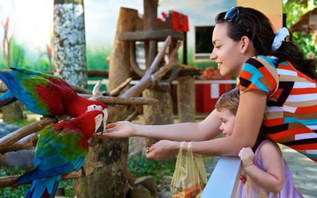 Jurong Bird Park - Guided Tour with Hotel Transfers