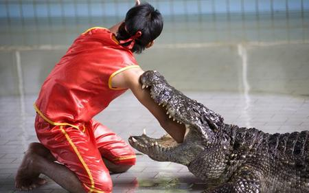 Bangkok Famous Landmarks: Crocodile farm and Ancient City Tour