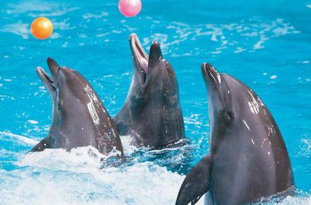 Dubai City Tour and Dolphin Show
