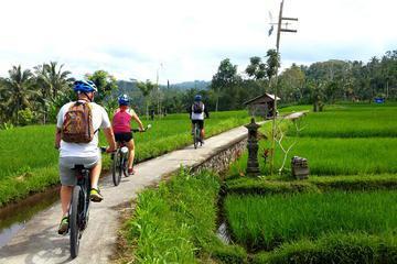 Half-Day Electric Bike Tour of Ubud