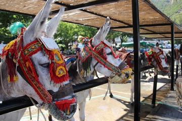 Mijas Village Tour on a Donkey