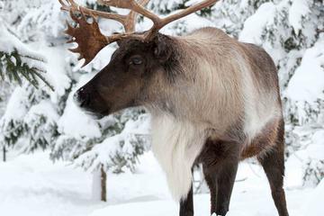 Ecomuseum Zoo: Discover Québec's Wildlife in Winter
