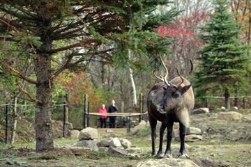 Ecomuseum Zoo: Discover Québec's Wildlife in Summer
