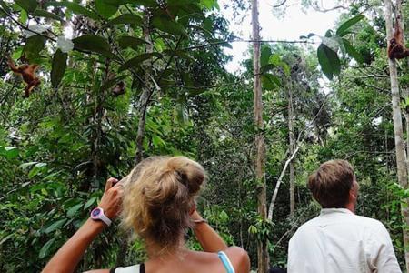 Semmengoh Orangutans Wildlife Centre Half Day Trip