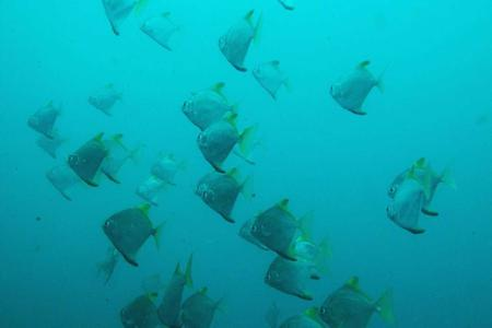 Satang Island National Park Snorkeling Trip